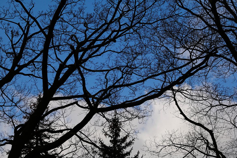 Baum an der Lilienthalstrasse