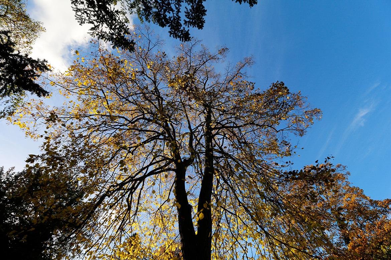 Goldener Herbst in Berlin