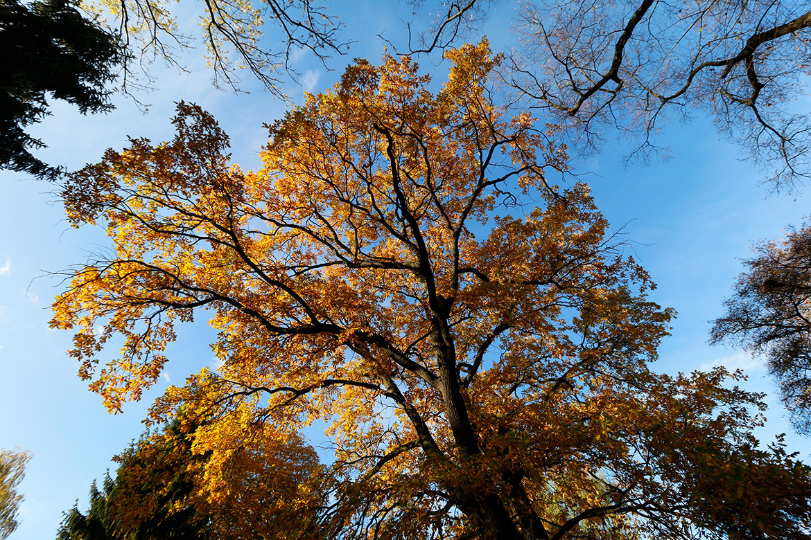 Goldener Herbst in Berlin